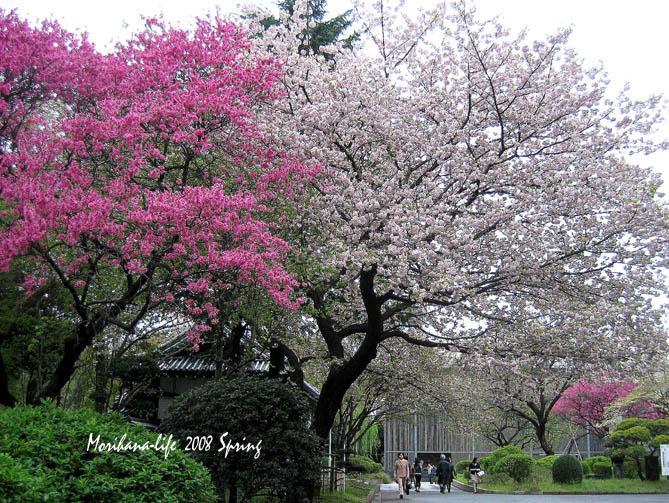 春色競演 blogトップ.jpg